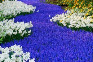 انتخاب رنگ آبی برای محوطه سازی و لنداسکیپ-طراحان سبز