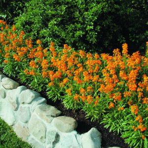 انتخاب رنگ نارنجی برای محوطه سازی و لنداسکیپ-طراحان سبز